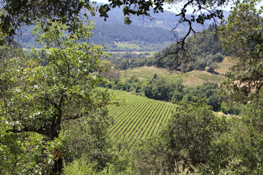 When is the best time to visit napa valley for Best time to visit napa valley wine country