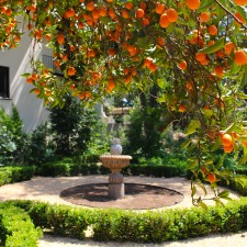 Looking For Inspiration on a Garden Tour in Pasadena