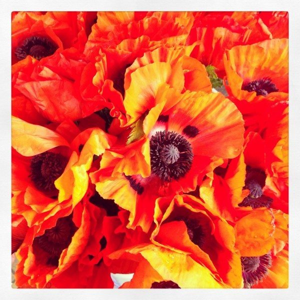 trip to Seattle, poppies