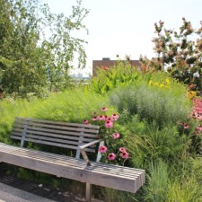 Adventure at the Park: Visit The High Line, NYC