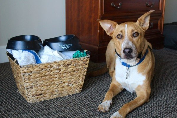 Doggy welcome basket at the Shearwater Inn