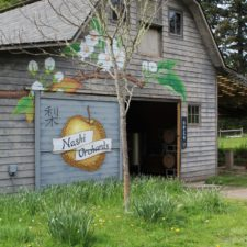 Seattle: A Postcard Perfect Visit to Vashon Island