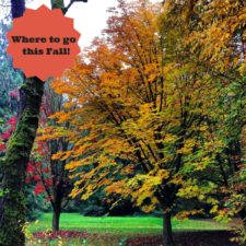Where to go this Fall ~ 7 Great Destinations to Enjoy!