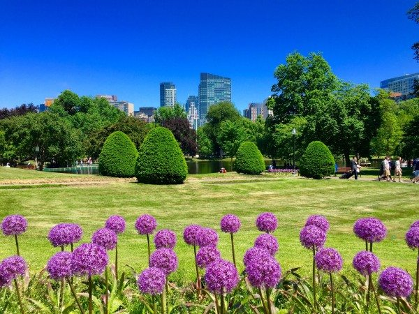 Boston Public Garden with the skyline in the background