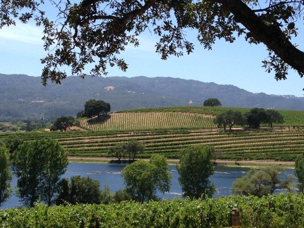 A view of vineyards and a lake, Napa Valley