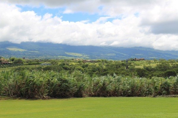 Views from the Vodka Sugarcane fields