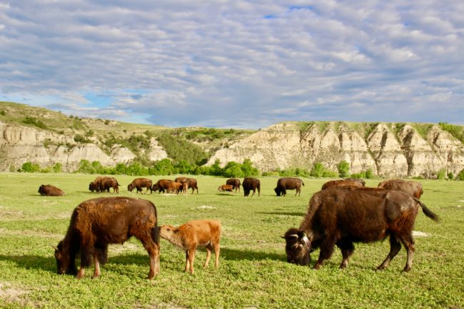 travel highlights in North Dakota