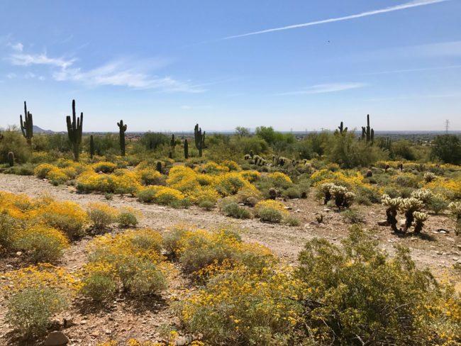 getaway to Phoenix