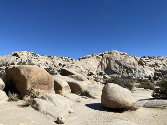 a visit to Joshua Tree National Park