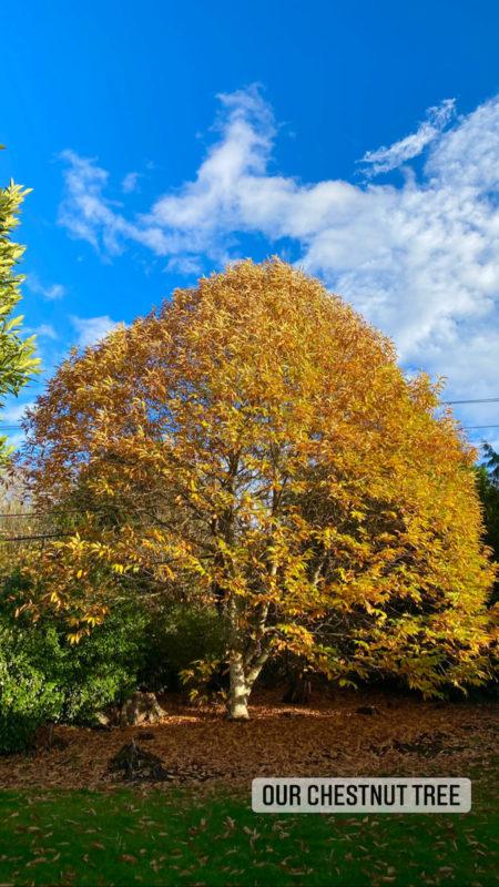 Autumn in the PNW